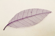 12 foglie naturali color prugna