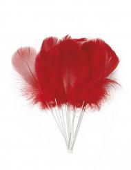 12 piume rosse con asticella