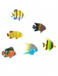 6 pesci tropicali decorativi