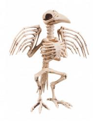 Scheletro di corvo Halloween