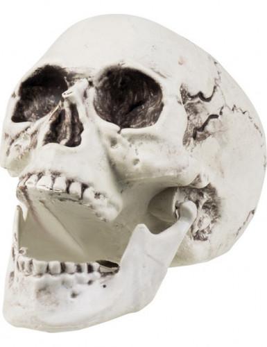 1 teschio decorativo per Halloween