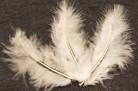 20 piume decorative avorio