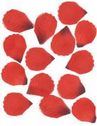 100 petali di tessuto rosso scuro