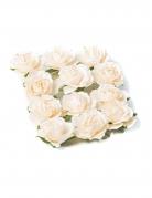 12 rose color avorio