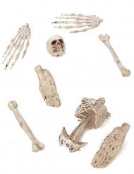 8 ossa decorative in plastica