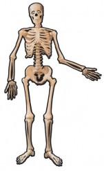 Decorazione scheletro in cartone