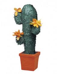 Pentolaccia messicana cactus