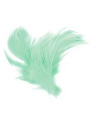 18 piume color menta 14 cm