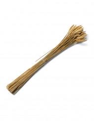 Bouquet di spighe di grano 60 cm