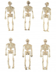 6 scheletri da 15 cm