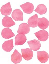 288 petali rosa fucsia