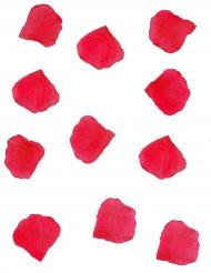 288 petali rossi