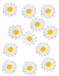 12 decorazioni per la tavola margherite