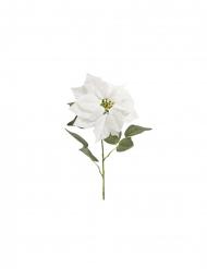Stelo stella di Natale velluto bianca 71 x 24 cm