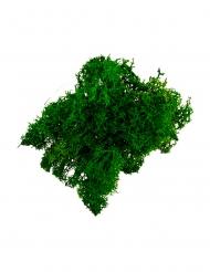 Muschio finto verde scuro