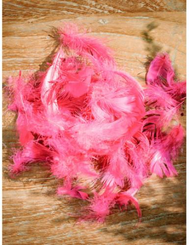 Piumette di colore fucsia-1