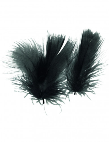 Piume nere per decorare