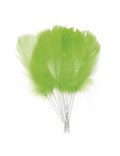 12 piume verde anice con bastoncino
