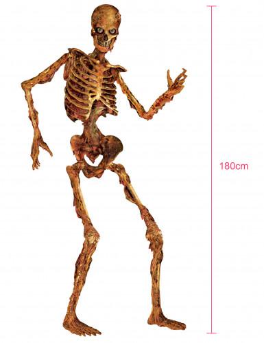 Decorazione scheletro di cartone per Halloween-1
