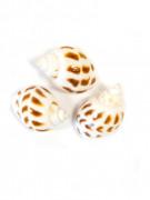 Lotto 6 piccole conchiglie decorative