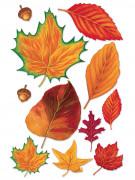 11 foglie autunnali