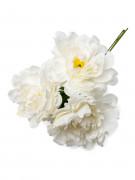 Bouquet 3 peonie bianche