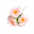 Bouquet 3 peonie rosa